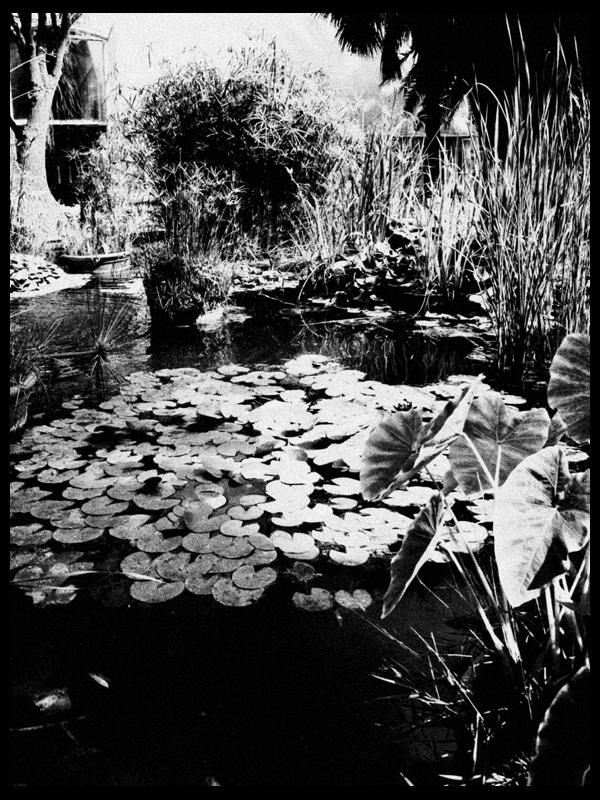 En el Botánico (III)