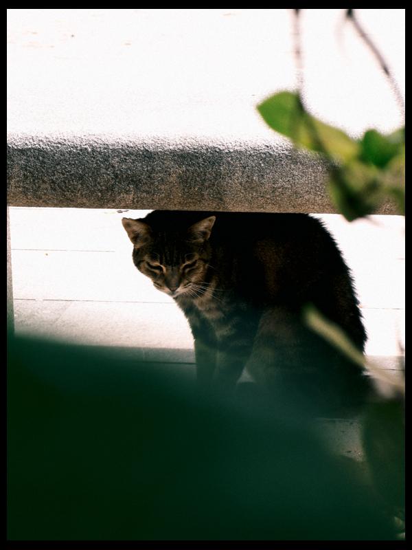 Botánico (VII) El útimo gato del Botánico (y no era verdad... pero lo parecía)