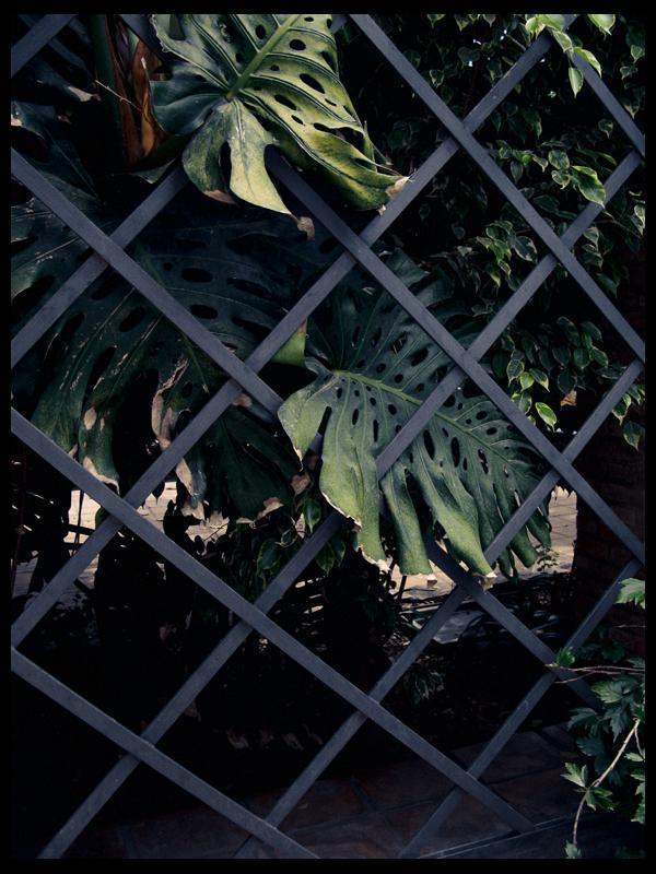Botánico (VIII)